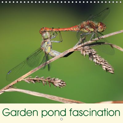 Garden pond fascination (Wall Calendar 2019 300 × 300 mm Square), Reinhard Rickert