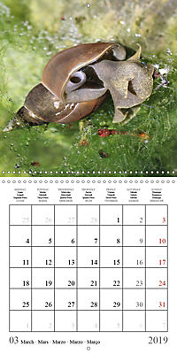 Garden pond fascination (Wall Calendar 2019 300 × 300 mm Square) - Produktdetailbild 3