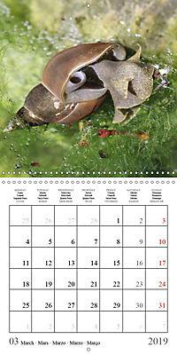 Garden pond fascination (Wall Calendar 2019 300 × 300 mm Square) - Produktdetailbild 3