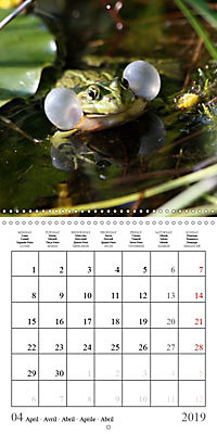 Garden pond fascination (Wall Calendar 2019 300 × 300 mm Square) - Produktdetailbild 4