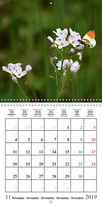 Garden pond fascination (Wall Calendar 2019 300 × 300 mm Square) - Produktdetailbild 11