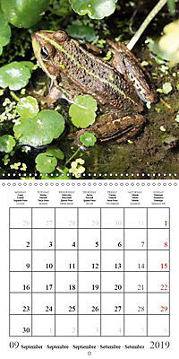 Garden pond fascination (Wall Calendar 2019 300 × 300 mm Square) - Produktdetailbild 9