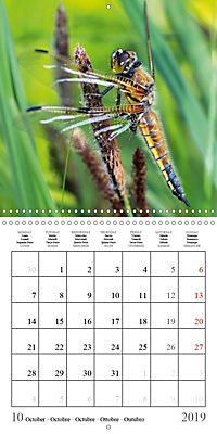 Garden pond fascination (Wall Calendar 2019 300 × 300 mm Square) - Produktdetailbild 10