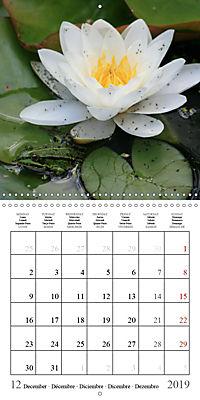 Garden pond fascination (Wall Calendar 2019 300 × 300 mm Square) - Produktdetailbild 12