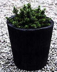Gartendeko aus Beton selbstgemacht - Weltbild-Ausgabe bestellen