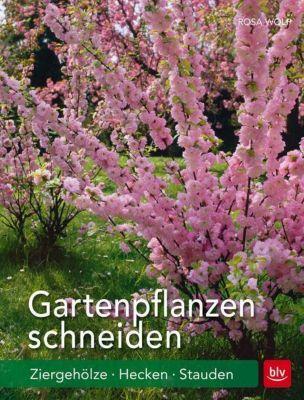 Gartenpflanzen schneiden, Rosa Wolf