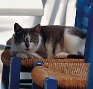 Geburtstagsplaner Katzen - Produktdetailbild 1