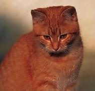 Geburtstagsplaner Katzen - Produktdetailbild 2
