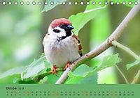 Gefiederte Gartengäste - Spatzenleben (Tischkalender 2019 DIN A5 quer) - Produktdetailbild 10