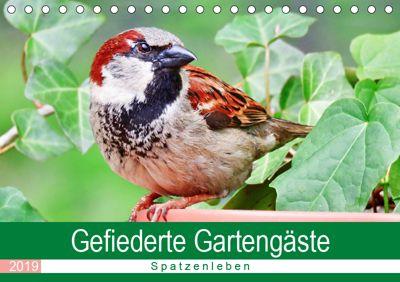 Gefiederte Gartengäste - Spatzenleben (Tischkalender 2019 DIN A5 quer), Sabine Löwer