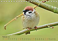 Gefiederte Gartengäste - Spatzenleben (Tischkalender 2019 DIN A5 quer) - Produktdetailbild 2