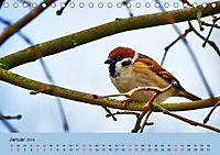 Gefiederte Gartengäste - Spatzenleben (Tischkalender 2019 DIN A5 quer) - Produktdetailbild 1