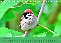 Gefiederte Gartengäste - Spatzenleben (Tischkalender 2019 DIN A5 quer) - Produktdetailbild 8