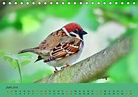 Gefiederte Gartengäste - Spatzenleben (Tischkalender 2019 DIN A5 quer) - Produktdetailbild 6