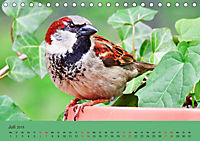 Gefiederte Gartengäste - Spatzenleben (Tischkalender 2019 DIN A5 quer) - Produktdetailbild 7