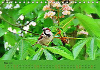 Gefiederte Gartengäste - Spatzenleben (Tischkalender 2019 DIN A5 quer) - Produktdetailbild 5