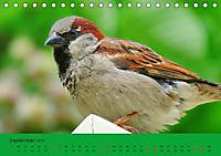 Gefiederte Gartengäste - Spatzenleben (Tischkalender 2019 DIN A5 quer) - Produktdetailbild 9