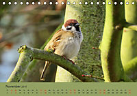 Gefiederte Gartengäste - Spatzenleben (Tischkalender 2019 DIN A5 quer) - Produktdetailbild 11