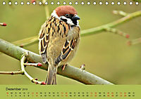 Gefiederte Gartengäste - Spatzenleben (Tischkalender 2019 DIN A5 quer) - Produktdetailbild 12