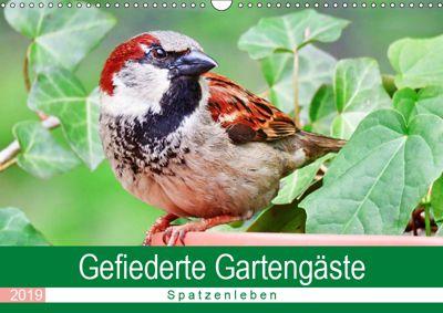 Gefiederte Gartengäste - Spatzenleben (Wandkalender 2019 DIN A3 quer), Sabine Löwer