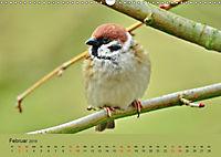 Gefiederte Gartengäste - Spatzenleben (Wandkalender 2019 DIN A3 quer) - Produktdetailbild 2