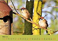 Gefiederte Gartengäste - Spatzenleben (Wandkalender 2019 DIN A3 quer) - Produktdetailbild 3