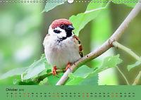 Gefiederte Gartengäste - Spatzenleben (Wandkalender 2019 DIN A3 quer) - Produktdetailbild 10