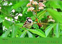 Gefiederte Gartengäste - Spatzenleben (Wandkalender 2019 DIN A3 quer) - Produktdetailbild 5