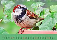 Gefiederte Gartengäste - Spatzenleben (Wandkalender 2019 DIN A3 quer) - Produktdetailbild 7