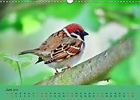 Gefiederte Gartengäste - Spatzenleben (Wandkalender 2019 DIN A3 quer) - Produktdetailbild 6
