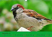 Gefiederte Gartengäste - Spatzenleben (Wandkalender 2019 DIN A3 quer) - Produktdetailbild 9