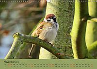 Gefiederte Gartengäste - Spatzenleben (Wandkalender 2019 DIN A3 quer) - Produktdetailbild 11