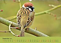 Gefiederte Gartengäste - Spatzenleben (Wandkalender 2019 DIN A3 quer) - Produktdetailbild 12