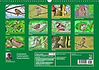 Gefiederte Gartengäste - Spatzenleben (Wandkalender 2019 DIN A3 quer) - Produktdetailbild 13