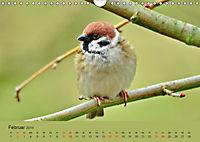 Gefiederte Gartengäste - Spatzenleben (Wandkalender 2019 DIN A4 quer) - Produktdetailbild 2