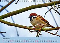 Gefiederte Gartengäste - Spatzenleben (Wandkalender 2019 DIN A4 quer) - Produktdetailbild 1