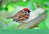 Gefiederte Gartengäste - Spatzenleben (Wandkalender 2019 DIN A4 quer) - Produktdetailbild 6