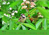 Gefiederte Gartengäste - Spatzenleben (Wandkalender 2019 DIN A4 quer) - Produktdetailbild 5