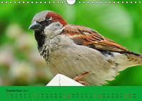 Gefiederte Gartengäste - Spatzenleben (Wandkalender 2019 DIN A4 quer) - Produktdetailbild 9