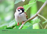 Gefiederte Gartengäste - Spatzenleben (Wandkalender 2019 DIN A4 quer) - Produktdetailbild 10