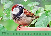 Gefiederte Gartengäste - Spatzenleben (Wandkalender 2019 DIN A4 quer) - Produktdetailbild 7