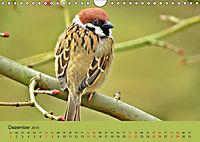 Gefiederte Gartengäste - Spatzenleben (Wandkalender 2019 DIN A4 quer) - Produktdetailbild 12