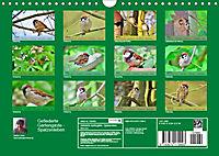 Gefiederte Gartengäste - Spatzenleben (Wandkalender 2019 DIN A4 quer) - Produktdetailbild 13