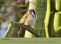 Gefiederte Gartengäste - Spatzenleben (Wandkalender 2019 DIN A4 quer) - Produktdetailbild 11