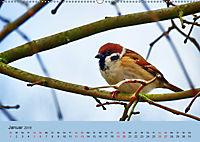 Gefiederte Gartengäste - Spatzenleben (Wandkalender 2019 DIN A2 quer) - Produktdetailbild 1