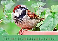 Gefiederte Gartengäste - Spatzenleben (Wandkalender 2019 DIN A2 quer) - Produktdetailbild 7