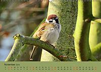Gefiederte Gartengäste - Spatzenleben (Wandkalender 2019 DIN A2 quer) - Produktdetailbild 11
