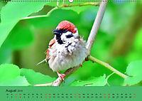 Gefiederte Gartengäste - Spatzenleben (Wandkalender 2019 DIN A2 quer) - Produktdetailbild 8