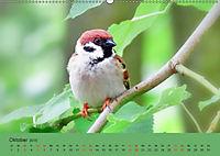 Gefiederte Gartengäste - Spatzenleben (Wandkalender 2019 DIN A2 quer) - Produktdetailbild 10