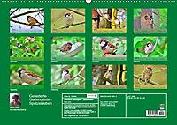 Gefiederte Gartengäste - Spatzenleben (Wandkalender 2019 DIN A2 quer) - Produktdetailbild 13